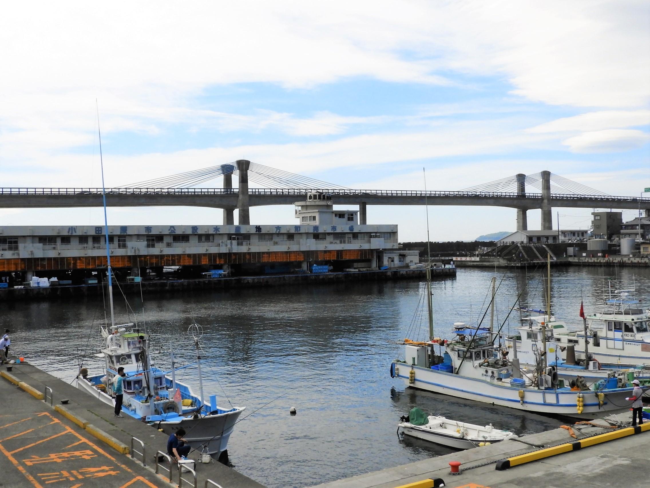 小田原漁港1