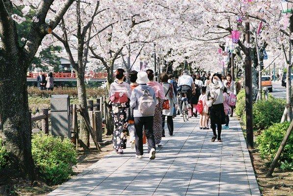 城址公園桜6