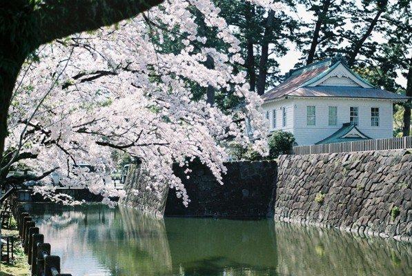 城址公園桜7