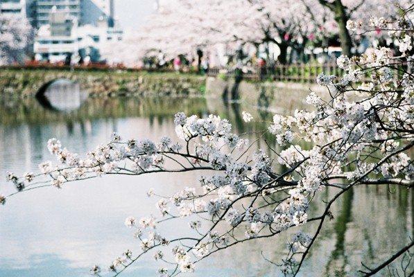 城址公園桜8