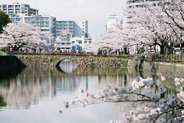 城址公園桜9