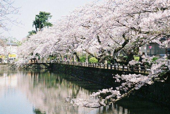 城址公園桜14
