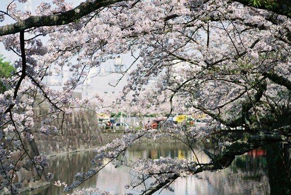 城址公園桜15