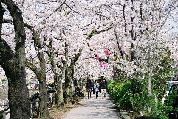 城址公園桜16