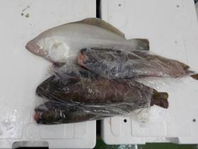 12鮮魚セット201747
