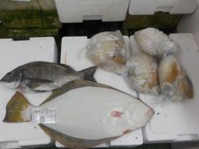 9鮮魚セット2017410