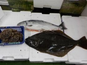 9鮮魚セット2017418