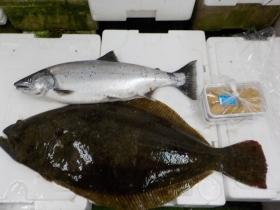 11鮮魚セット2017428