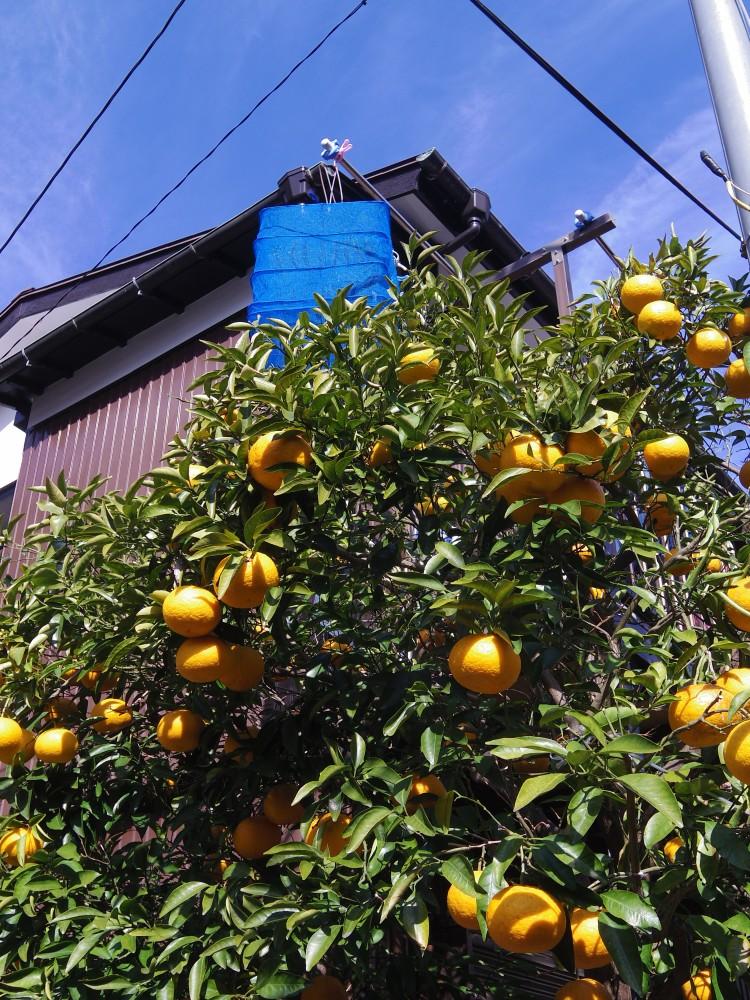 manazuru_07s.jpg