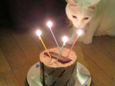ケーキをふ~4歳_convert_20170218121748