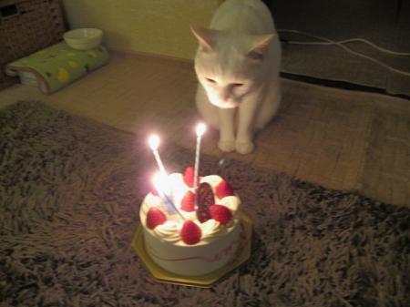 ケーキをふ~8歳