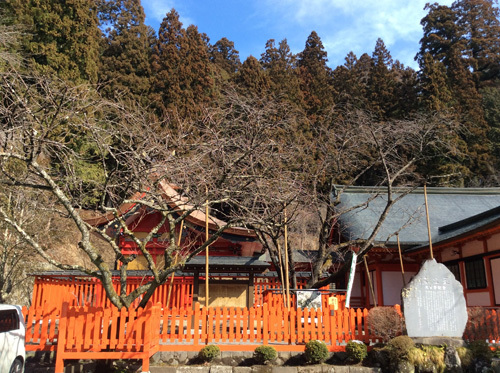 20170402 金櫻神社 本殿と鬱金桜