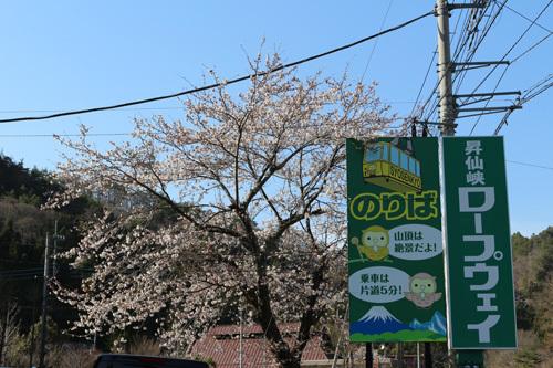 20170416 滝上の桜 (1)