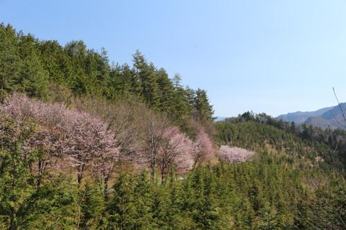 20170430猫坂峠から黒平までの道のり (2)