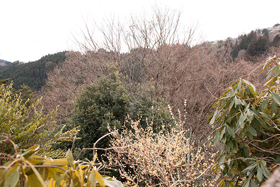 蠟梅の見える景色IMG_3161