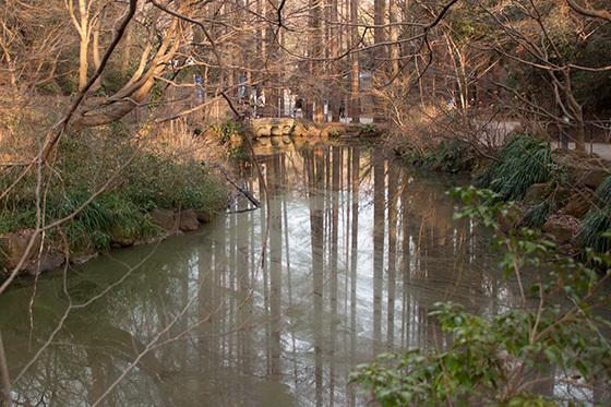 メタセコイアの池IMG_3526