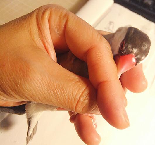 きな爪切りsKIMG3506