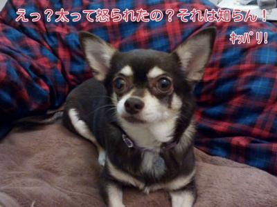 17-02-20-04-11-14-134_deco.jpg