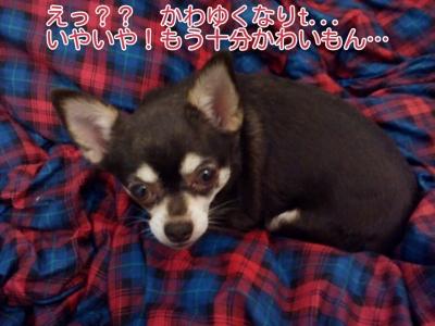 17-02-21-05-44-05-288_deco.jpg