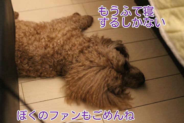 17-04-15-09-03-41-691_deco.jpg