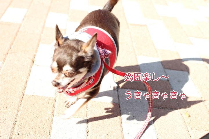 17-04-23-16-47-27-736_deco.jpg