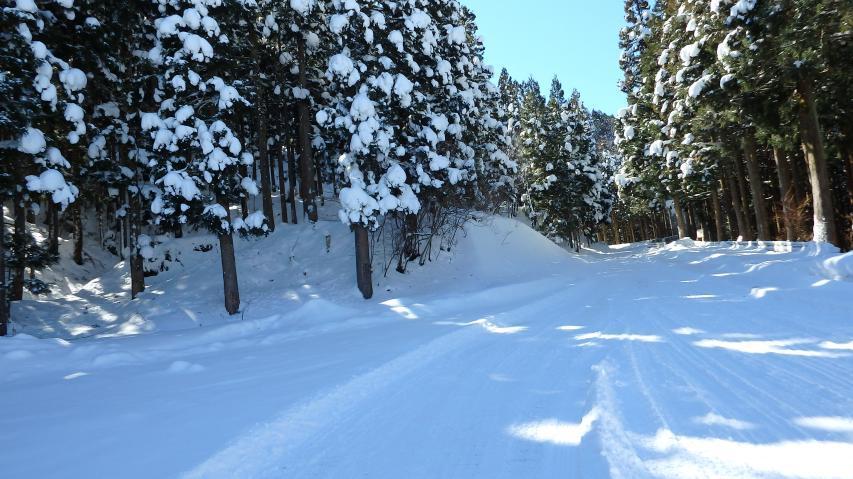登山車道は登るにつれて乾雪