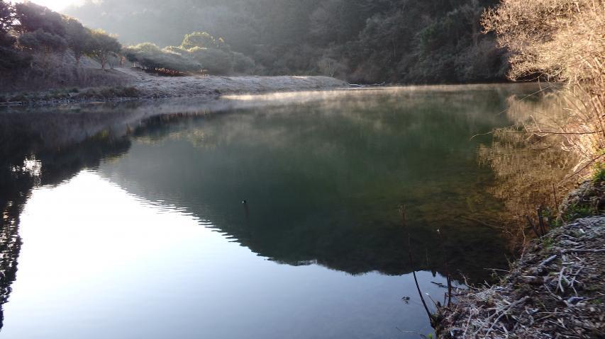 池の奥まったところで蒸気霧が見られる