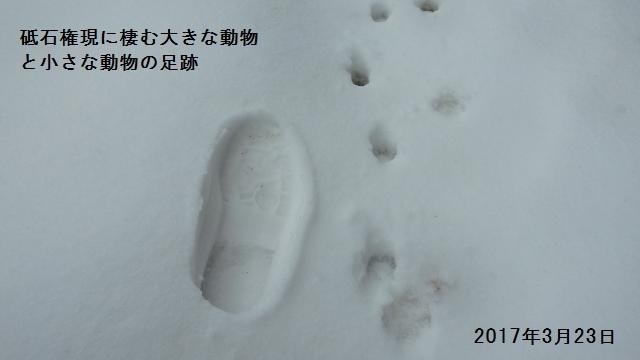大きな動物と小さな動物の足跡