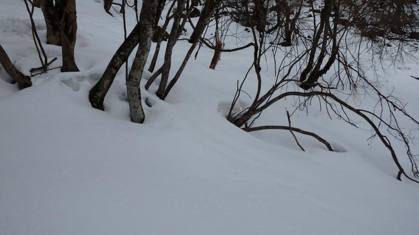 なんと積雪は50-100センチのレベル
