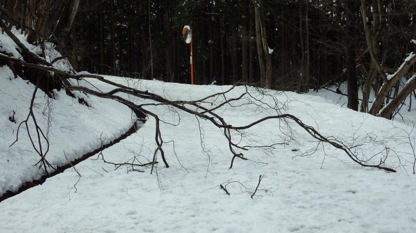 倒木を除けるのにノコギリ必携
