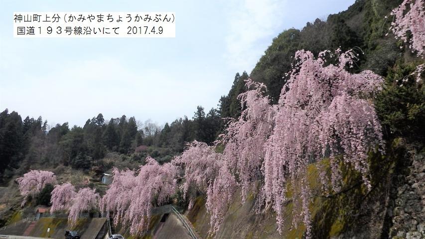 神山町上分(かみやまちょうかみぶん) 国道193号線沿い