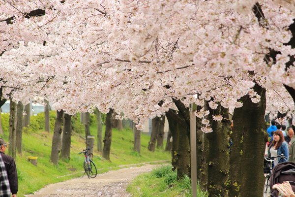 01, 2017-04-09 桜之宮 大阪城公園 016 600×400