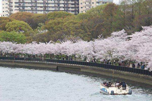 04, 2017-04-12 造幣局 桜の通り抜け 016 600×400