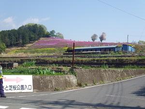 シバ桜公園
