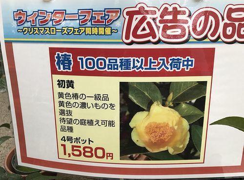 2,8赤塚植物園-2初黄