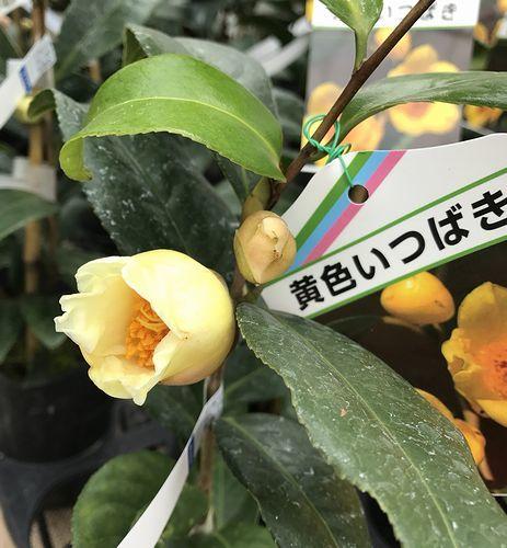 2,8赤塚植物園-3初黄