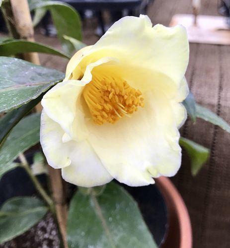 2,8赤塚植物園-4初黄