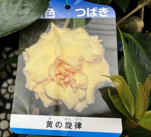 2,8赤塚植物園-5黄の旋律