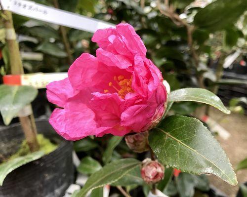 2,8赤塚植物園-9フラワーガール