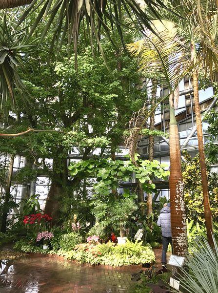 2,8赤塚植物園-10温室