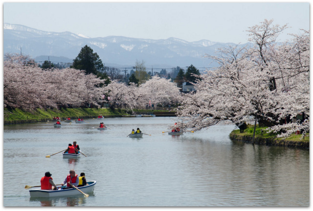 青森県 弘前市 弘前城 弘前公園 弘前さくらまつり 桜 サクラ 祭り 観光 写真