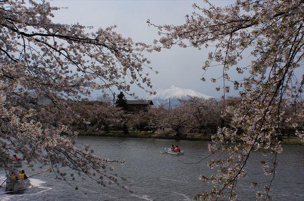 桜と岩木山2