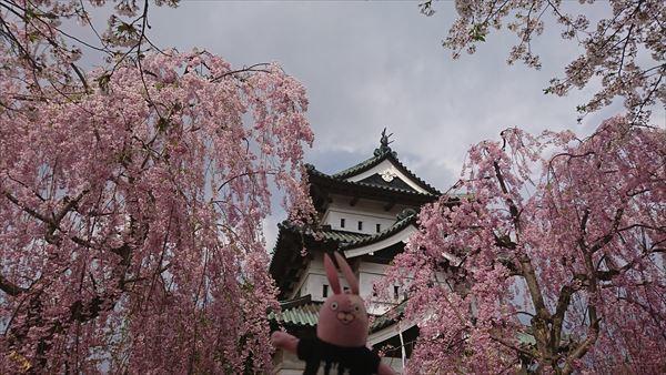 天守と枝垂桜1