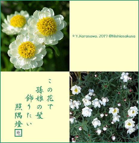 170315花かんざし