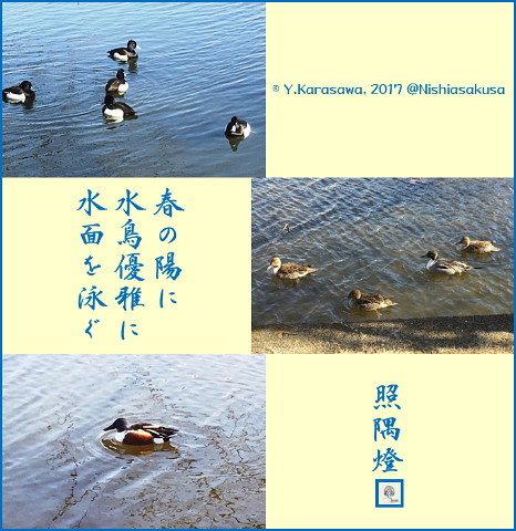 170325水鳥@不忍池