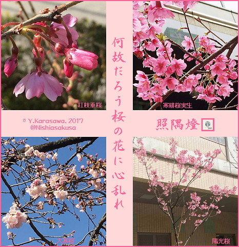 170328桜