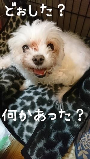 yuki0411.jpg