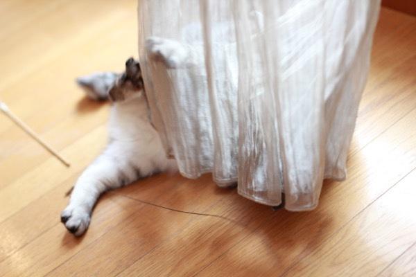 catddas12.jpg