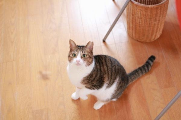 lovefcats1.jpg