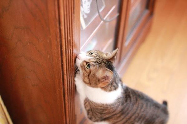 lovefcats10.jpg